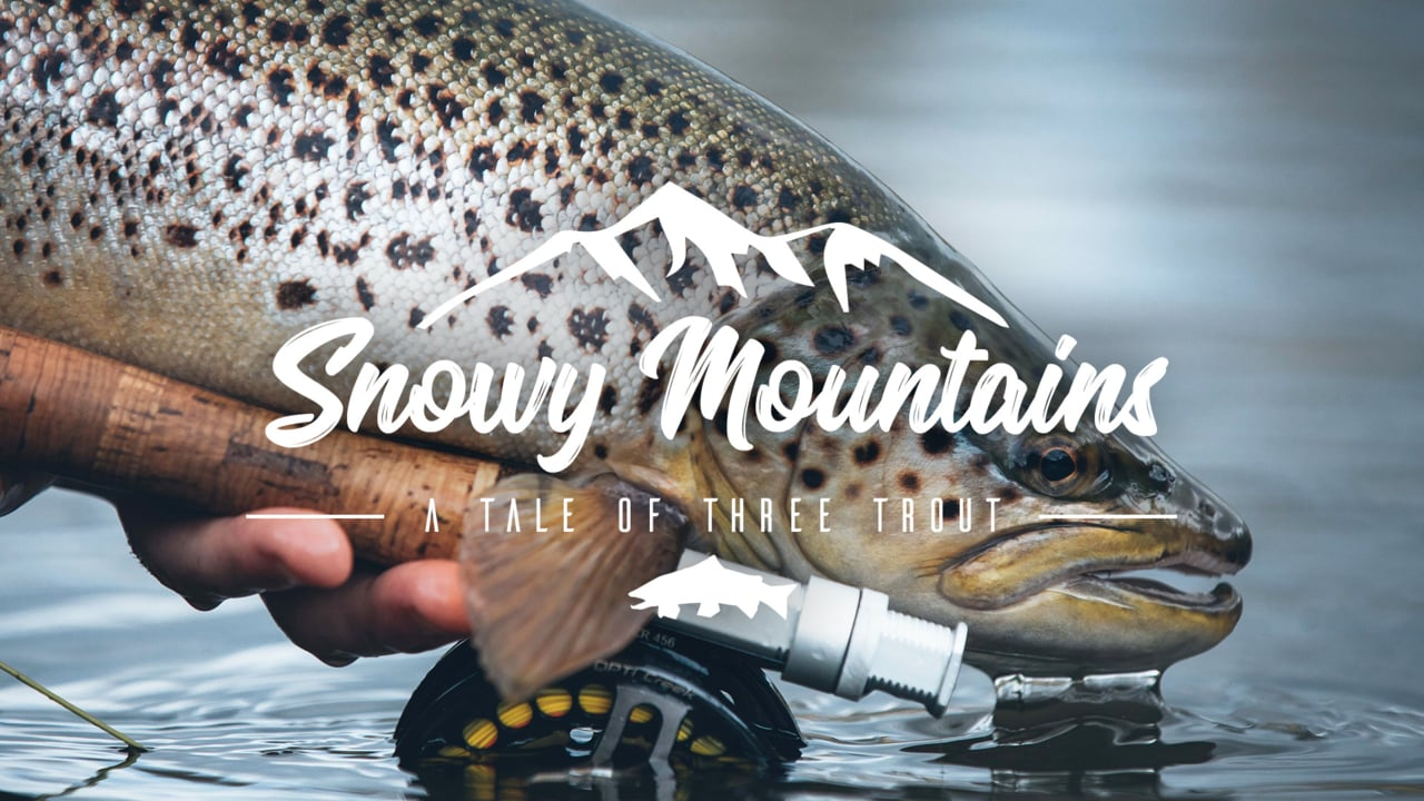 A-Tale-Of-Three-Trout-Snowy-Mountains-Australia