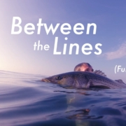 BETWEEN-THE-LINES-FULL-FILM-Fly-Fishing-for-HUGE-Striped-Bass