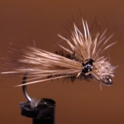 BPS-Spent-Caddis
