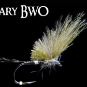 BWO-Peccary-Dry-Fly-Quill-Doesnt-cut-it..-AndyPandy
