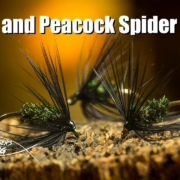 Black-and-Peacock-Spider-fly-tying