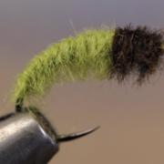 Caddis-Larva
