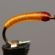 Chimarra-Caddis-Larva