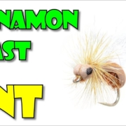 Cinnamon-Toast-Ant-by-Fly-Fish-Food