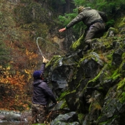 FALL-RUN-by-Todd-Moen-Steelhead-Fly-Fishing