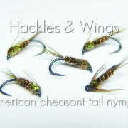 Fly-Tying-American-Pheasant-Tail-Nymph-Hackles-Wings