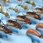 Fly-Tying-Corixa-Water-Boatman-Hackles-Wings
