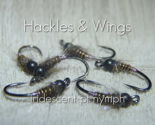 Fly-Tying-Iridescent-Pheasant-Tail-Nymph-Hackles-Wings
