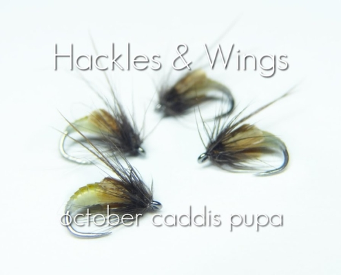 Fly-Tying-October-Caddis-Pupa-Hackles-Wings