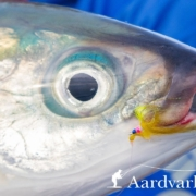 How-To-Catch-A-Milkfish