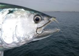 How-to-tie-the-Super-Schminnow-Simple-but-effective-pattern-that-mimics-a-baitfish-or-shrimp