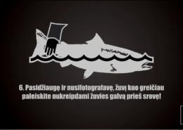 Kaip-teisingai-paleisti-lasisa-How-to-properly-release-salmon