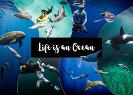 Life-is-an-Ocean
