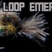 Loop-Wing-Emerger-Loop-The-Loop-AndyPandy