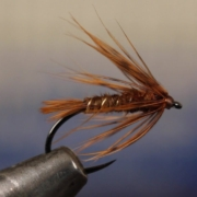 October-Caddis-Soft-Hackle