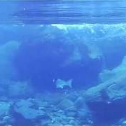 Salmon-fishing-in-Iceland-with-underwater-camera