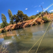 Sight-Fishing-Brown-trout-New-Zealand