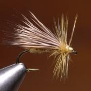 Solomon-Hairwing-Caddis
