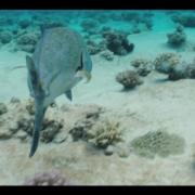The-Forgotten-Atoll-2nd-Teaser-Trailer