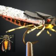 The-Sickada-Foam-Cicada-Fly-Pattern-by-Curtis-Fry