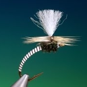 Tying-the-Vulgata-emerger-with-Barry-Ord-Clarke