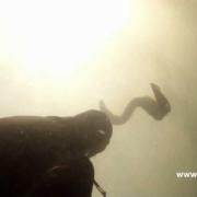 Unguriu-medziokle-II-Eel-spearfishing-part-II-Lithuania