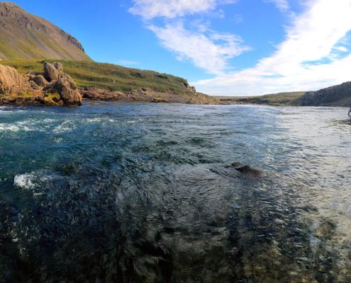 Fluefiskeri efter laks på Svalbarðsá, Island