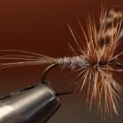 Adams-Dry-Fly