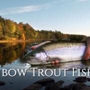 Autumn-Rainbow-Trout