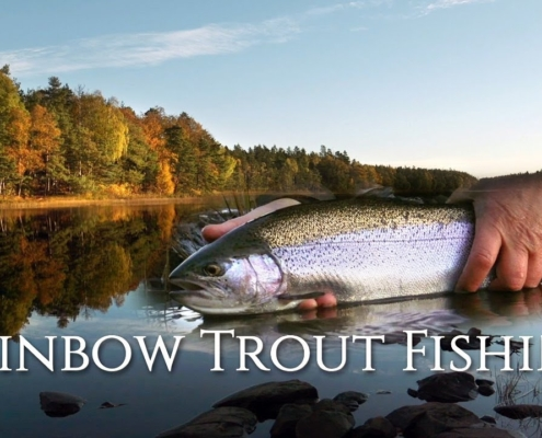 Autumn-Rainbow-Trout