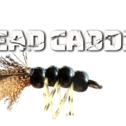 Bead-Caddis