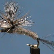 Beginner-Fly-Tying-a-Grey-Fox-Emerger-with-Jim-Misiura