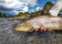 Big-Brown-Trout-caught-on-Secret-Fly-New-Zealand