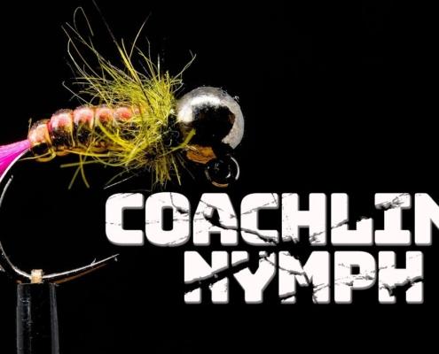 Coachline-Nymph