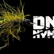 DNA-nymph