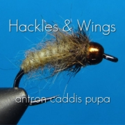 Fly-Tying-Antron-Caddis-Pupa-Hackles-Wings
