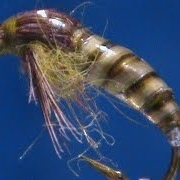 Fly-Tying-a-Biot-Body-Caddis-Pupa-with-Jim-Misiura