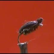 Fly-Tying-a-Deer-Hair-Beetle