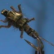 Fly-Tying-a-LivelyLegz-Spinnerbait-Stonefly-with-Jim-Misiura