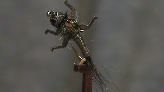 Fly-Tying-a-Tungsten-Bead-LivelyLegz-Nymph-with-Jim-Misiura