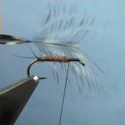 Fly-Tying-with-Hans-Little-Black-Stonefly