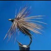Fly-tying-a-Peacock-Caddis