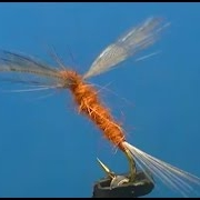 Fly-tying-a-Rusty-Spinner-Dry-Fly