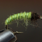 Green-Caddis-Larva