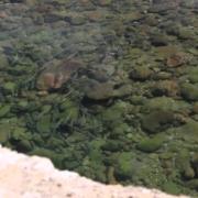 High-amp-Dry-Yellowfishing-in-Lesotho