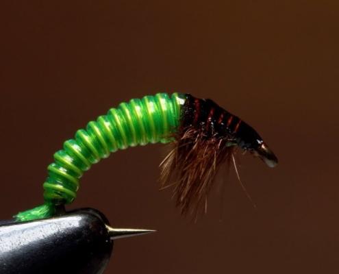 JCs-Electric-Caddis-Larva