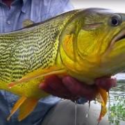Juramento-Fly-Fishing-Golden-Dorado-Argentina-by-Todd-Moen