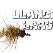 Llandaff-Larva