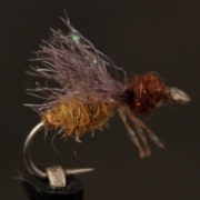 Mikes-Honey-Ant
