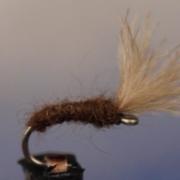 Mole-Fly